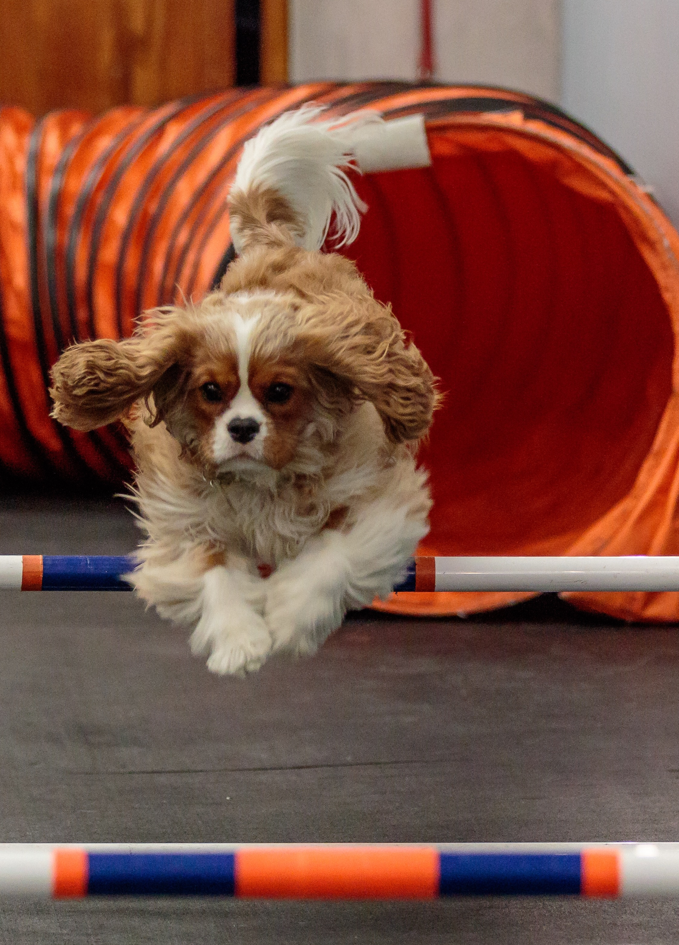 Dawson | Trophy Club | Zoom Room Dog Training