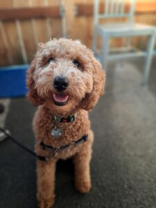 Rudy is dog of the month