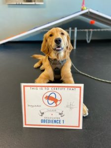 Tucker is dog of the month